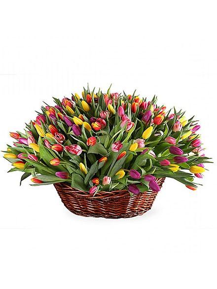 151 тюльпан в корзинке